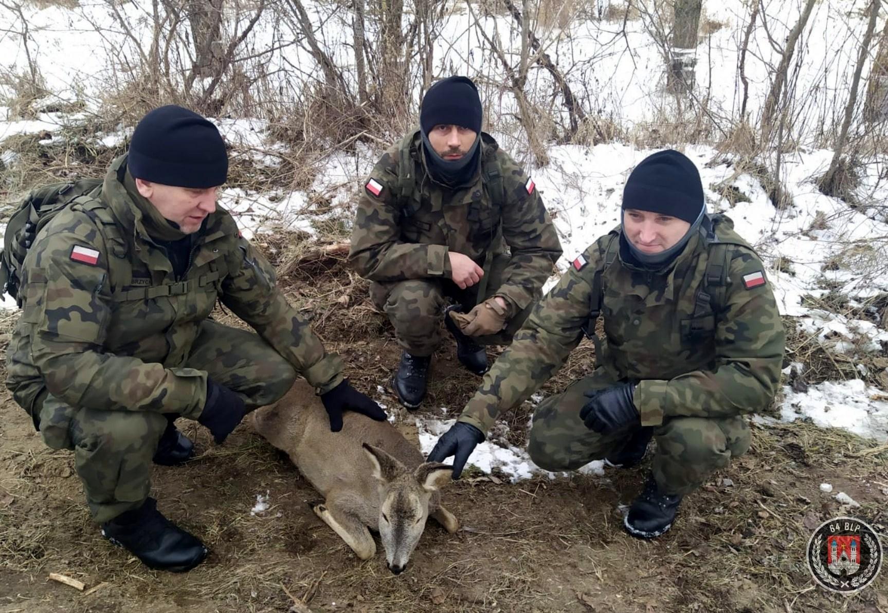 Zwierzęta walczą z żywiołem. Terytorialsi uratowali sarnę - Zdjęcie główne