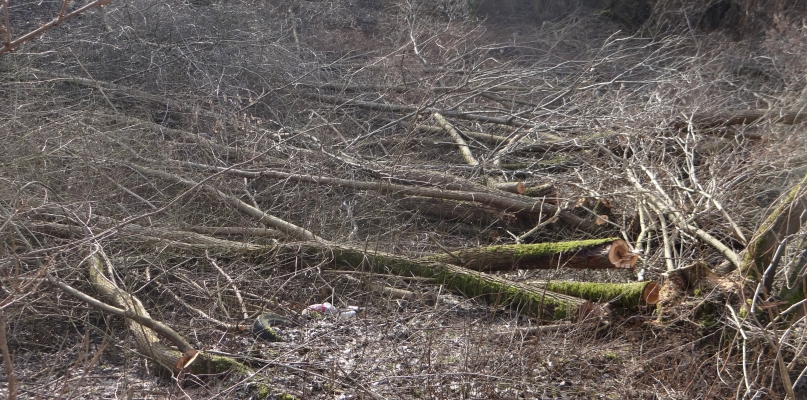 Trwa wycinka drzew w  jarze Rosicy na osiedlu Imielnica [FOTO] - Zdjęcie główne