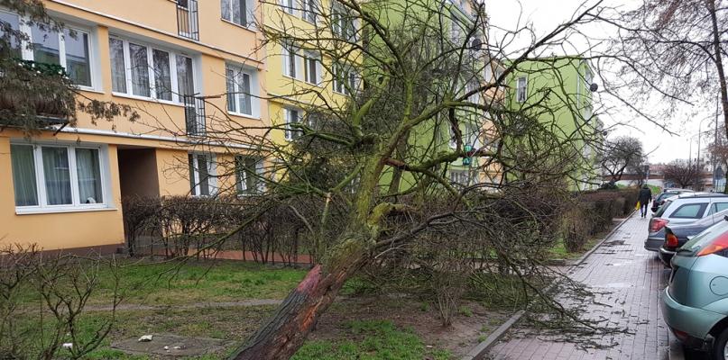 Wichura łamała gałęzie i powaliła drzewa, doszło do kolizji - Zdjęcie główne