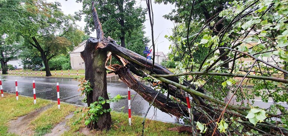 Nawałnica nad Płockiem. Powyrywane drzewa, zablokowane ulice [ZDJĘCIA] - Zdjęcie główne