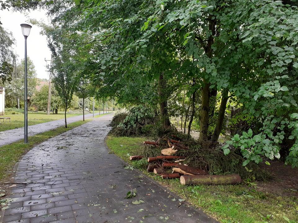 Co się stanie z powalonymi drzewami? - Zdjęcie główne