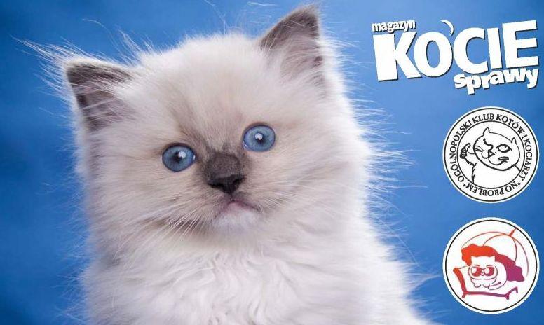KONKURS: Wygraj bilety na wystawę kotów - Zdjęcie główne