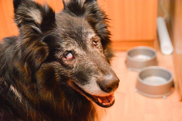 Adoptował psa, który nie widzi [WYWIAD] - Zdjęcie główne
