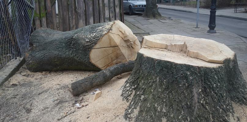 Stop dla niekontrolowanej wycinki drzew - Zdjęcie główne