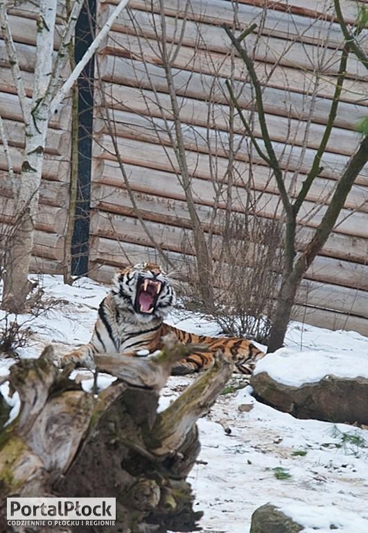 Wędrówka trasą zimowego zwiedzania - Zdjęcie główne