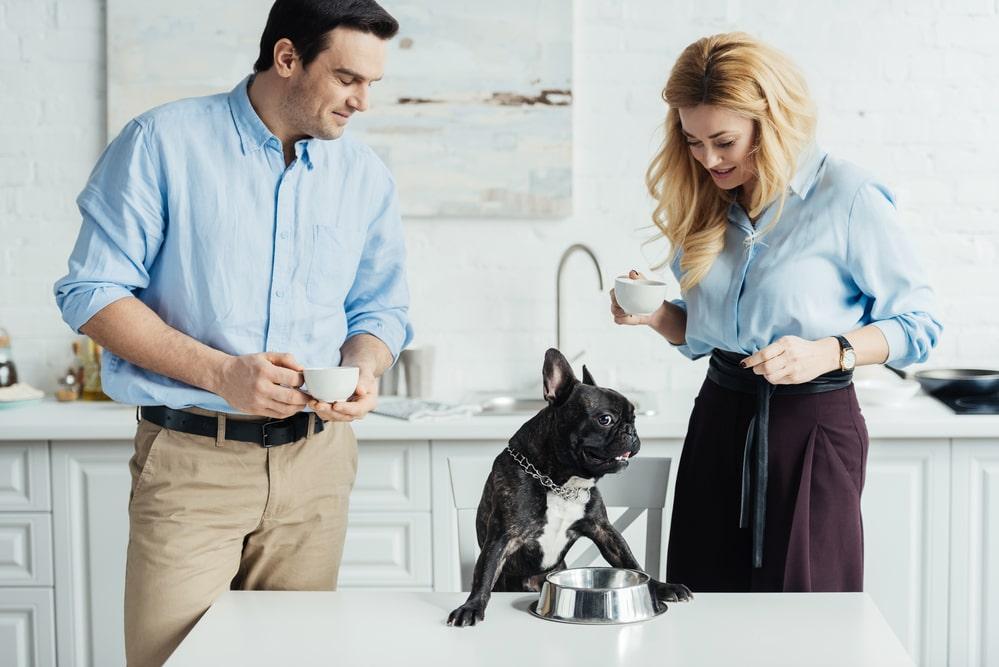 Jaką karmę dla psa wybrać? - Zdjęcie główne
