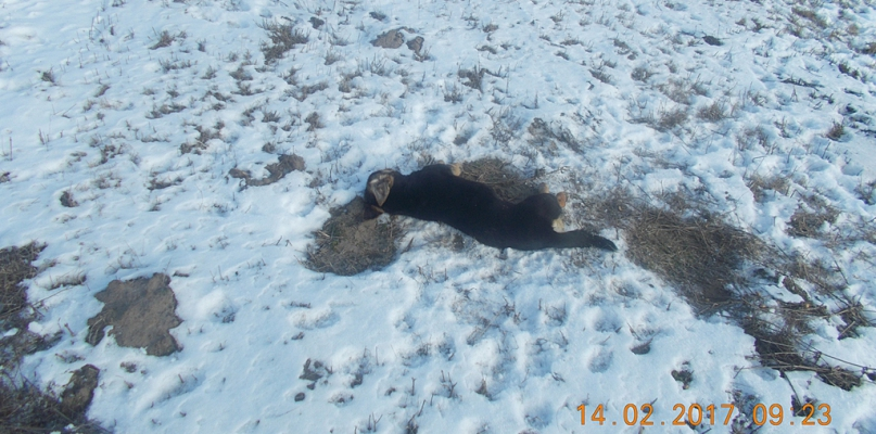 Strażnicy znaleźli dwa wychudzone psy. Jeden był martwy - Zdjęcie główne