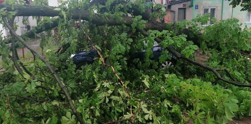 Wichura w okolicy Płocka. Drzewo spadło na auto - Zdjęcie główne