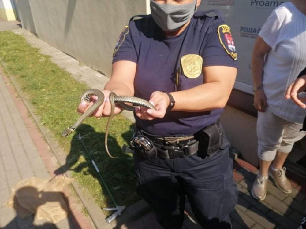 Wąż wpełzł do biura i schował się między dokumentami! Interweniowała straż miejska [ZDJĘCIA] - Zdjęcie główne