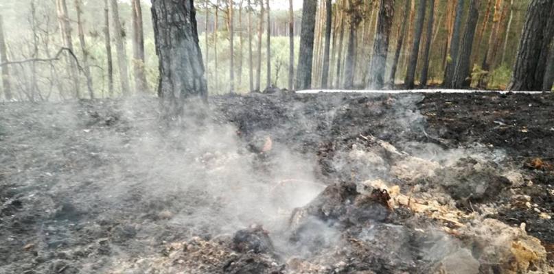 Kolejny pożar lasu. Ktoś robi to celowo? - Zdjęcie główne