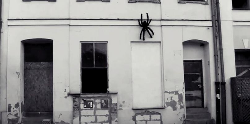 Duży pająk zawisł na ścianie kamienicy na starówce [VIDEO] - Zdjęcie główne