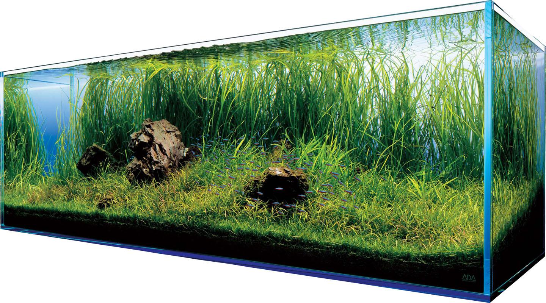 Akwarystyka - wyposażenie akwarium - Zdjęcie główne