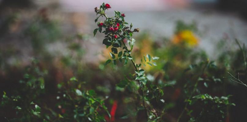 Zielone płuca dla Płocka. Nowa roślinność na osiedlach [FOTO] - Zdjęcie główne