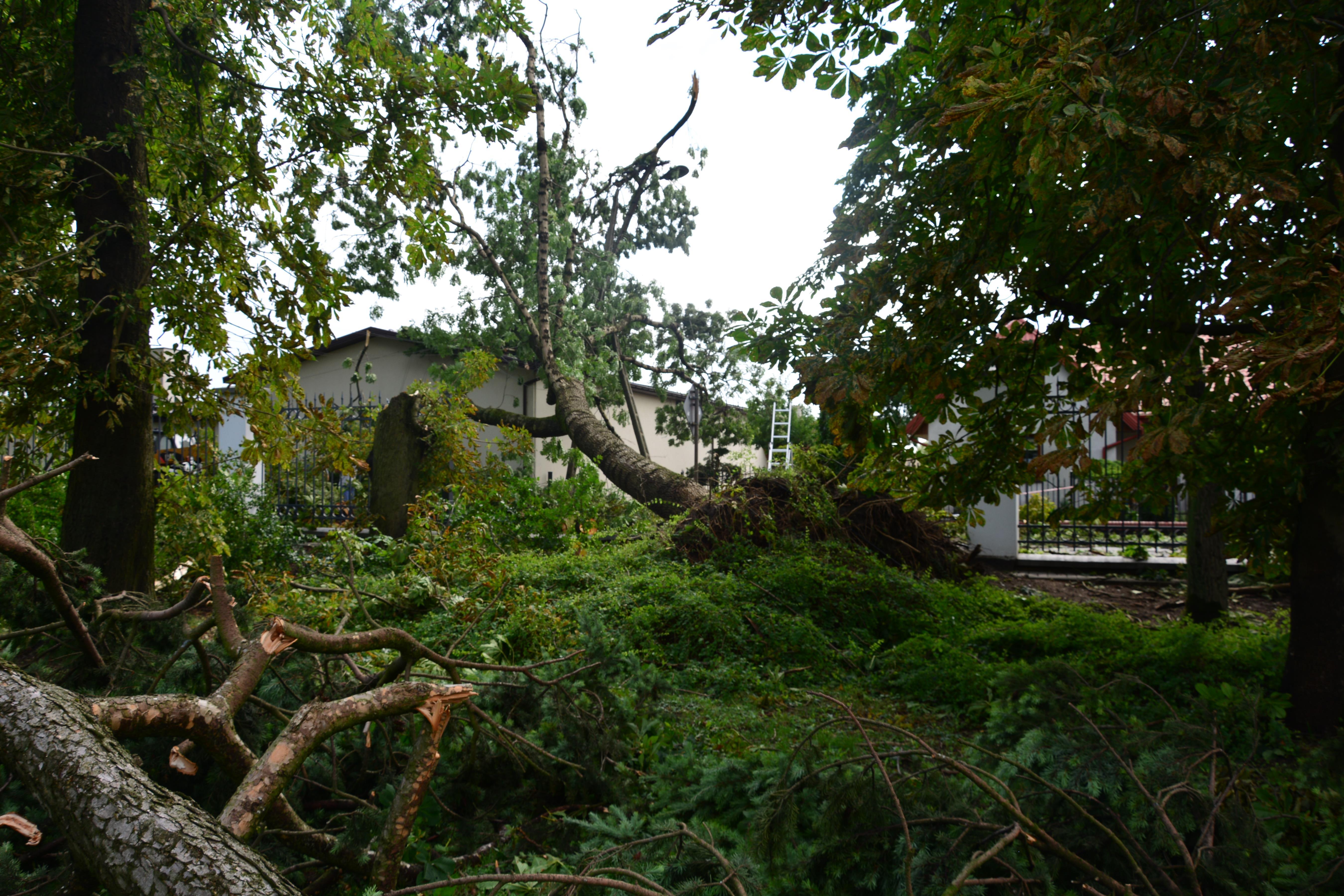 Zniszczenia w zespole pałacowym w Sannikach. Park zamknięty [ZDJĘCIA] - Zdjęcie główne
