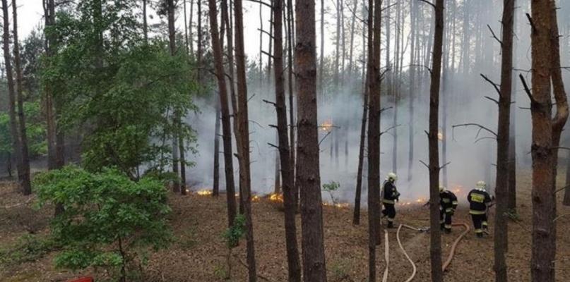 Kolejny pożar lasu! Straż apeluje o ostrożność  - Zdjęcie główne