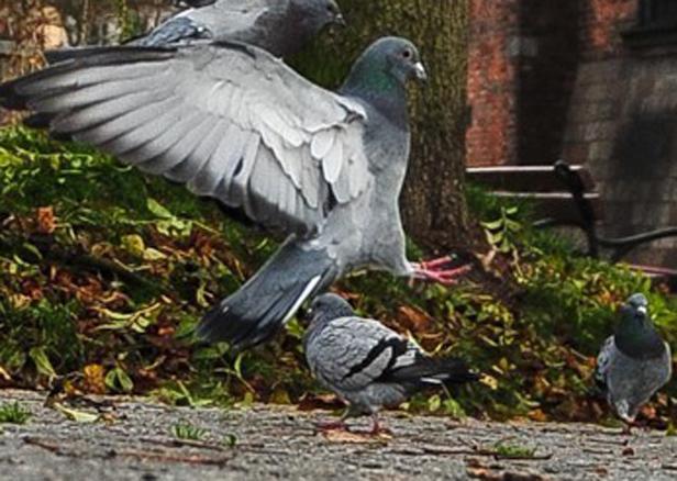 List: Problem kup? Kupmy ptaki drapieżne - Zdjęcie główne