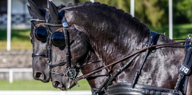 Konie, pokazy, ognisko i degustacje w Łącku - Zdjęcie główne