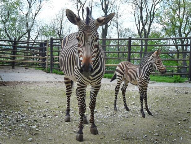 Zobaczcie, co urodziło się w zoo [FOTO] - Zdjęcie główne