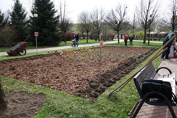 Zobaczcie płocki ogród społeczny [FOTO] - Zdjęcie główne