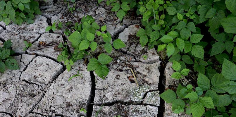 Burze nie pomagają. Powiat płocki zagrożony ekstremalną suszą - Zdjęcie główne