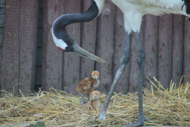 Niezwykłe ptasie narodziny w ZOO w Płocku - Zdjęcie główne
