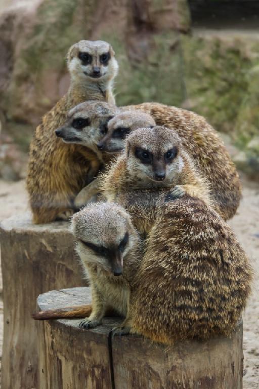 Zoo już otwarte! - Zdjęcie główne