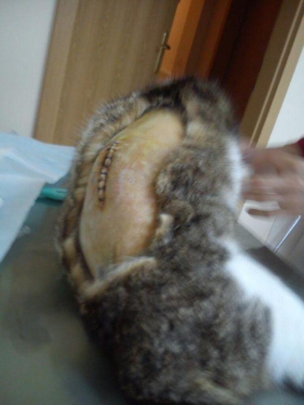 Sadysta strzelał z wiatrówki do kotki - Zdjęcie główne
