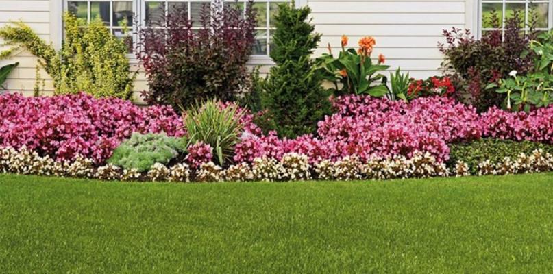 Tajemnica pięknego trawnika? Sprawdź, które nasiona trawy warto wykorzystać w ogrodzie! - Zdjęcie główne