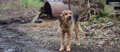 Psia niedola - pół beczki i łańcuch. Za to właściciel postanowił bronić jednego psa z łopatą - Zdjęcie główne