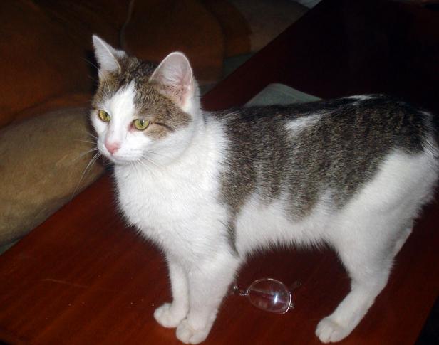 Koty pani Danusi wciąż u pani Danusi - Zdjęcie główne