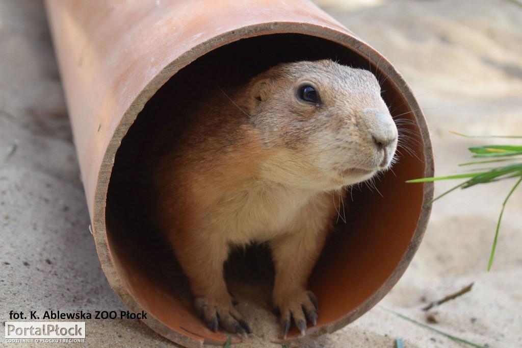 Zoo ma nowych podopiecznych - Zdjęcie główne