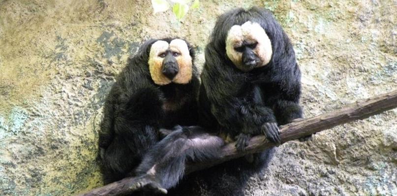 Płockie zoo ma troje nowych podopiecznych - Zdjęcie główne