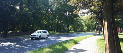 Przebudowa al. Kilińskiego. Część drzew nie przetrwa. Trwa wycinka - Zdjęcie główne