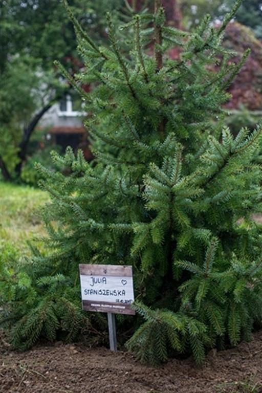 Drzewa młodych płocczan - Zdjęcie główne