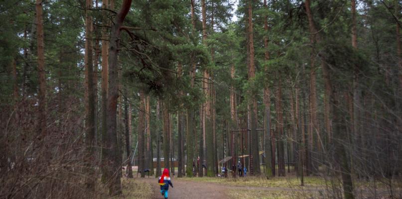 Zostań w domu, ale też idź do lasu? Nadleśnictwa ogłaszają zakaz - Zdjęcie główne