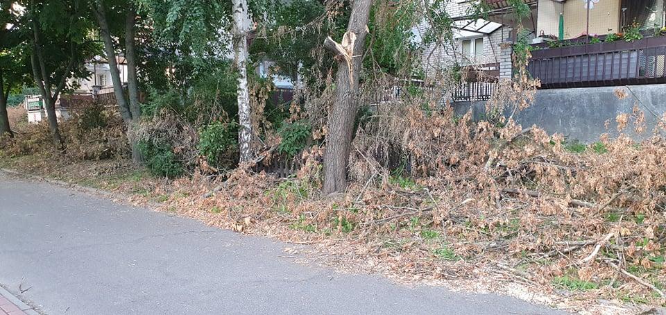 Mnóstwo drzew i gałęzi wciąż zalega na trawnikach. Dlaczego sprzątanie trwa tak długo? - Zdjęcie główne