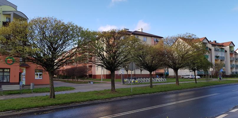 Prawie grudzień, a drzewa w Płocku kwitną. Pąki powinny puścić w marcu - Zdjęcie główne