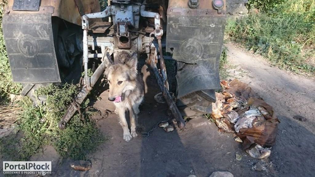 Psy wegetujące na krótkim łańcuchu - Zdjęcie główne