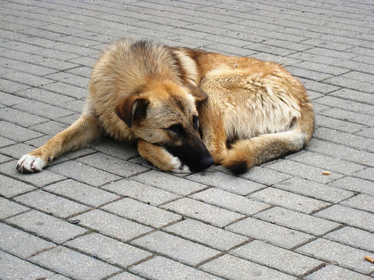 Mnóstwo zwierząt jest porzucanych. Czy płocczanie chętnie adoptują czworonogi ze schroniska?  - Zdjęcie główne