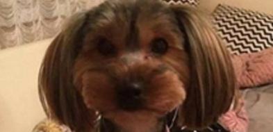 Zaginął pies. Właściciele podejrzewają kradzież - Zdjęcie główne