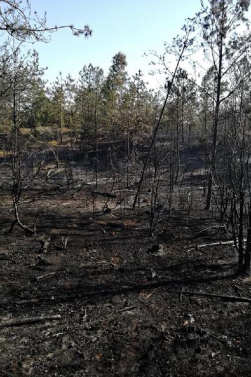 Pożar lasu niedaleko Płocka - Zdjęcie główne
