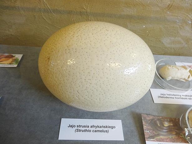 W zoo szykują imprezę z jajami i zającem - Zdjęcie główne