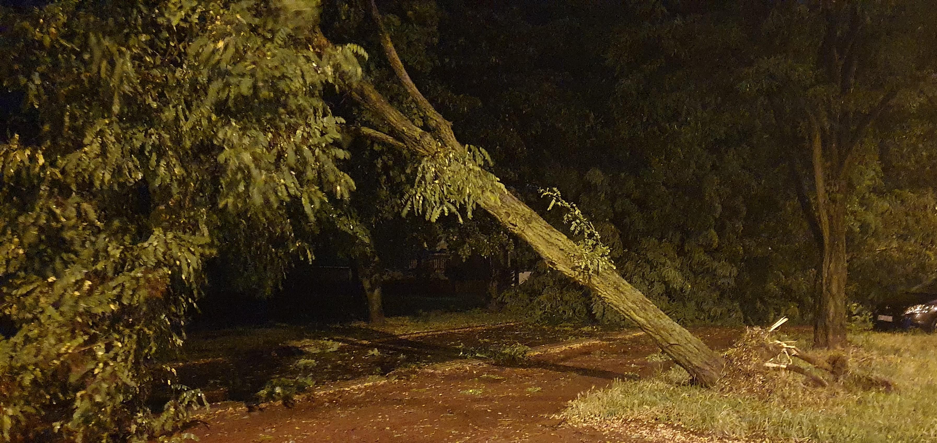 Drzewo przewróciło się na jadący samochód. 3 osoby ranne  - Zdjęcie główne