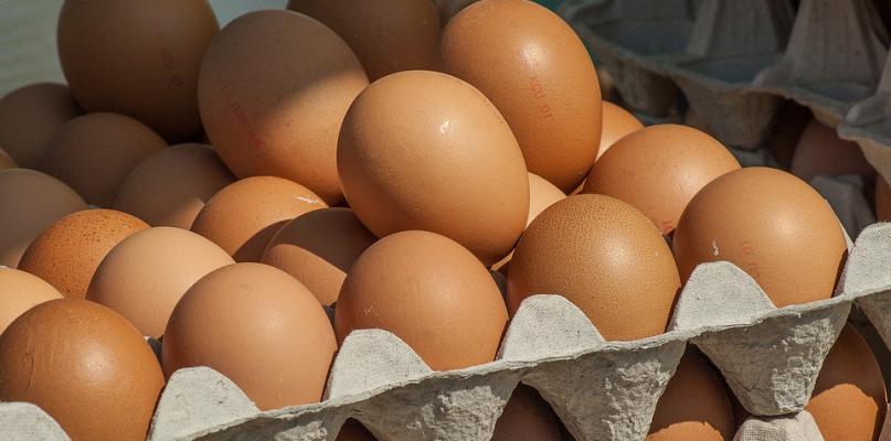 Uwaga! Skażone jajka trafiły do sprzedaży! - Zdjęcie główne