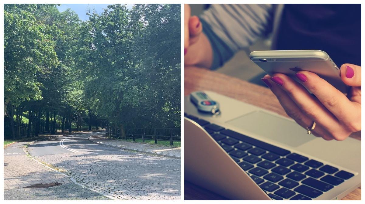 Gdzie w Płocku powinni posadzić drzewo? Miejsce możesz wskazać sam! - Zdjęcie główne