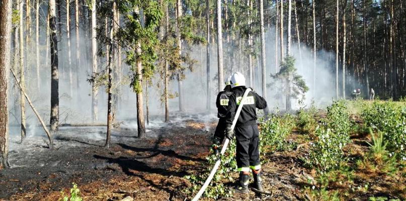 Pożar lasu tuż pod Płockiem. Osiem zastępów w akcji  - Zdjęcie główne