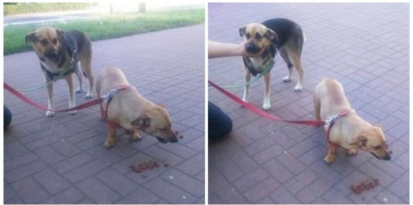 Na Jachowicza ktoś przywiązał psy i zostawił w taki upał - Zdjęcie główne