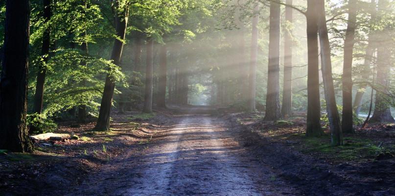 Planowałeś wycieczkę do lasu? Na razie możesz o tym zapomnieć - Zdjęcie główne