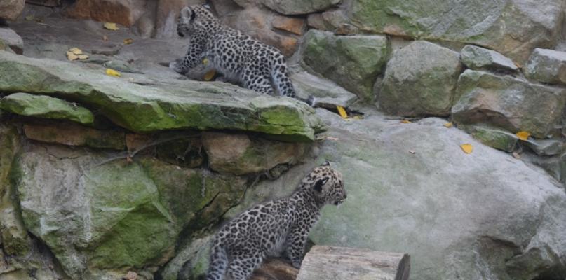 Wysyp młodych, nowa ekspozycja. W zoo sezon się nie kończy! [FOTO] - Zdjęcie główne
