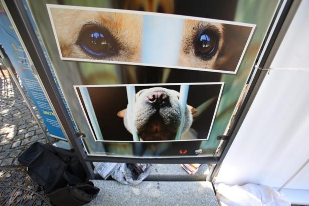 Zachęcają do adopcji psów. Jak to wygląda? - Zdjęcie główne